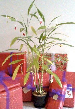 O Christmas Bamboo O Christmas Bamboo...